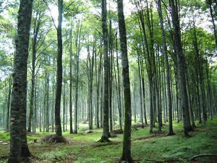 Lo stagno e la foresta due esempi di ecosistema for Piante dello stagno