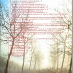 IV copertina 50
