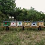 Le api: un BUON progetto per le scuole