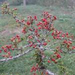 Il verde Molise, fra preistoria, riserve della biofera, oliveti e tratturi