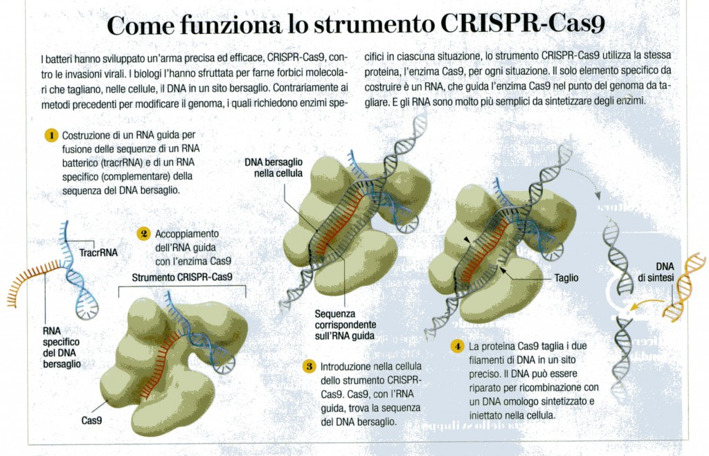 CRISPR (2)