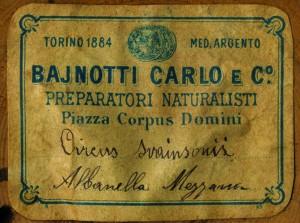 INV 425 cartellino Circus macrourus