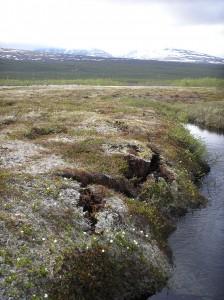 Il permafrost presso la torbiera di Storflaket, presso Abiskos nel nord della Svezia, mostra segni di frattura ai bordi a causa dello scongelamento