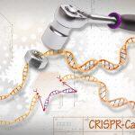 Correzione di difetti ereditari in embrioni umani grazie a CRISPR–Cas9