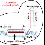 """Chi dice che i batteri """"fanno male""""? I CRISPR ed il loro potenziale genetico"""