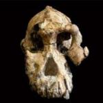 Scoperto in Etiopia il più antico cranio di Australopiteco