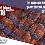 Wiki Science Competition 2019