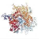L'intelligenza artificiale prevede la forma delle proteine